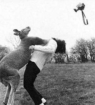 Kangaroo-punch-woman