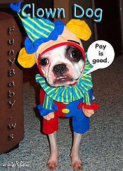 Dog-clown