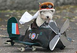 Dog-in-spitfire 2