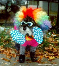 Dog_clown