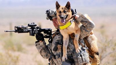 Carrying-dog-www.fastcompany.com_