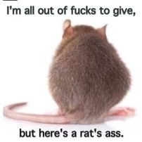 Out-of-Fucks-to-Give_Rats-Ass_smaller