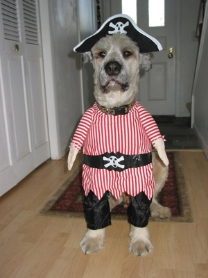 Dog-in-pirate-costume