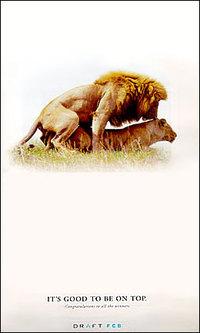 Draft_lion_ad