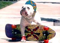 Skateboarddog