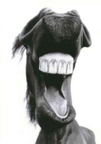 Horsemouth